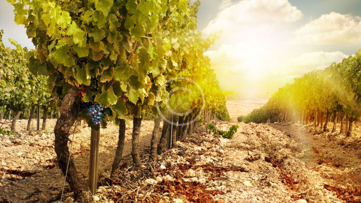 Daily Wine News: The Art of Storytelling