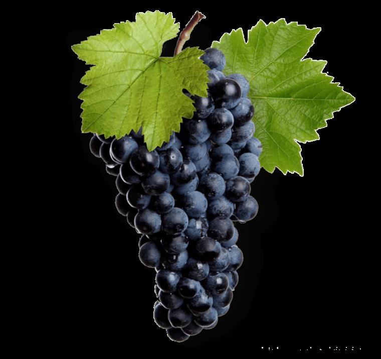 The wine made from Saperavi grape variety/ მუკუზანი/ Мукузани