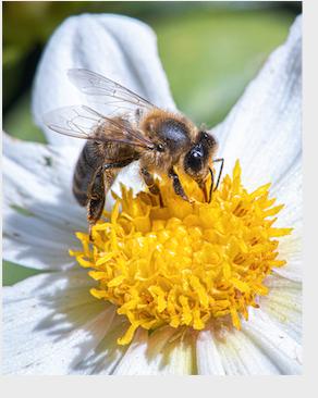 Saperavi wine , aloe and honey for chronic low back pain/საფერავი, ალოე და თაფლი წელის ქრონიკული ტკივილის დროს